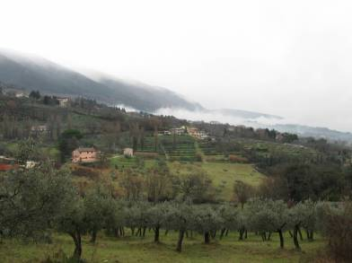 Olive Trees outside San Damiano